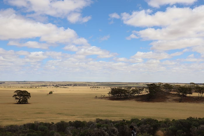 View from Buntine Rock.