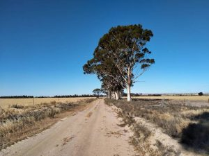 Back road in the lake country south of Kellerberrin.