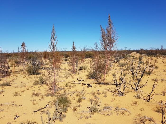 The beginnings of regrowth after a devastating fire.