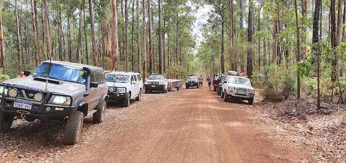 Karri forest on the way to Shannon.