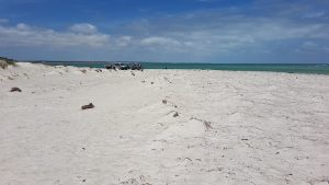 The beach at Thirsty Point, Cervantes.