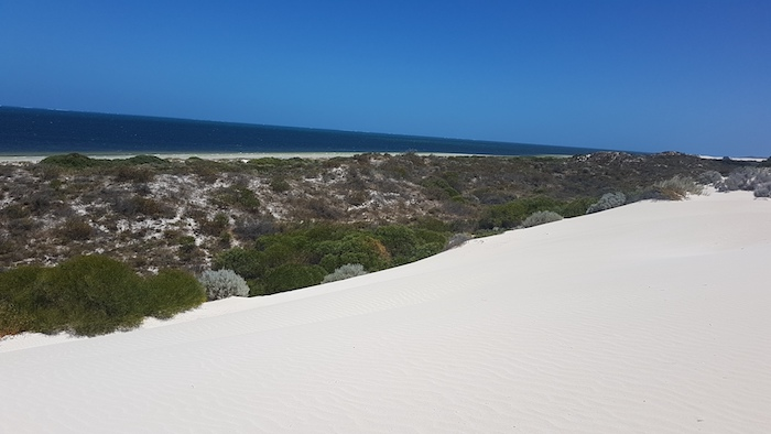 The was no way through to the beach from these dunes north of Gum Tree Bay.