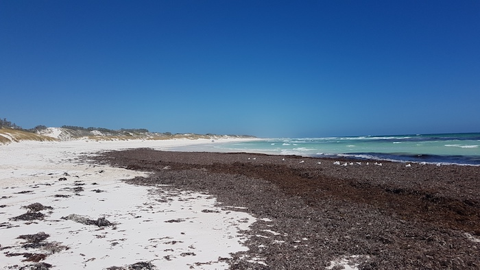 Seagrass at the northern end of Wedge Beach
