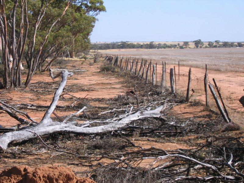 An intact section of the No.1 Rabbit Proof Fence at Burracoppin.