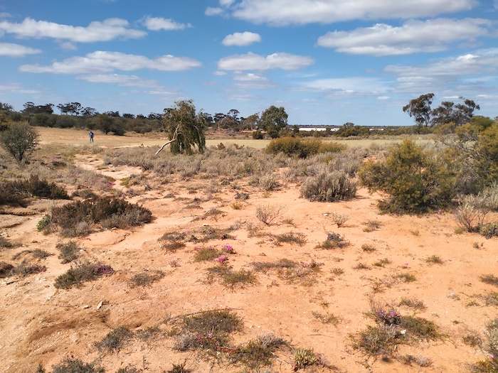 A gully leads from a hill (now the 18th Tee of the golf course) to Hunts Well on the edge of Lake Koorkoordine.